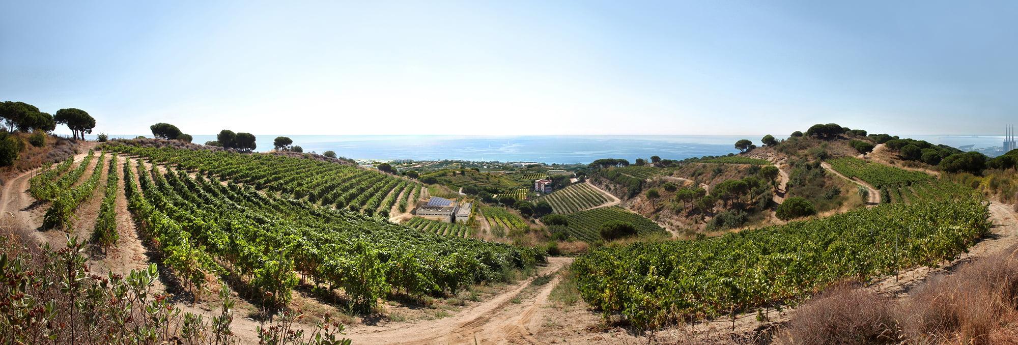 Alta Alella Non Dos Wine panorama