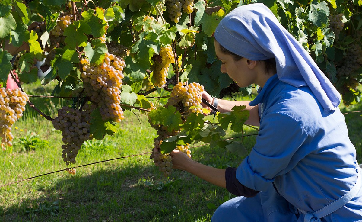 One of the nuns at monastero suore cistercensi tending the vines. Photo courtesy https://nondos.no/